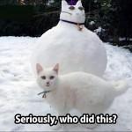 anger cat
