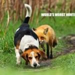worst hunting dog